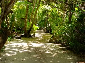 Long Caye Forest