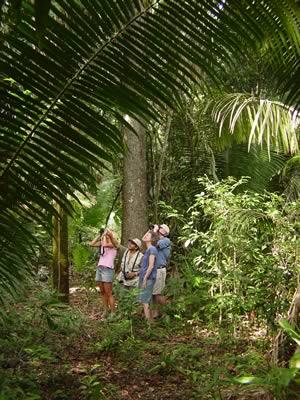 Lamanai Jungle Hike