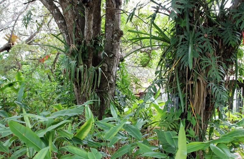 Belize Eco Village