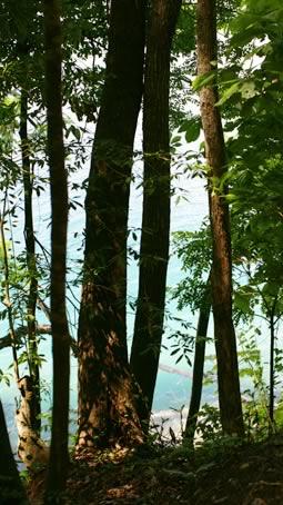 La Lancha Forest