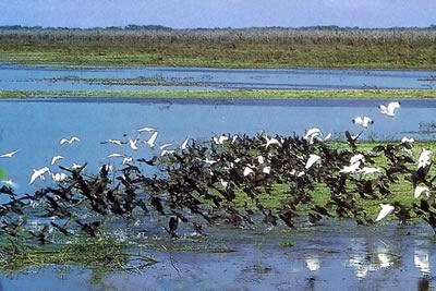 Belize Wetlands