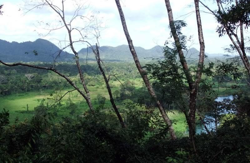 cottontree-kites-hill
