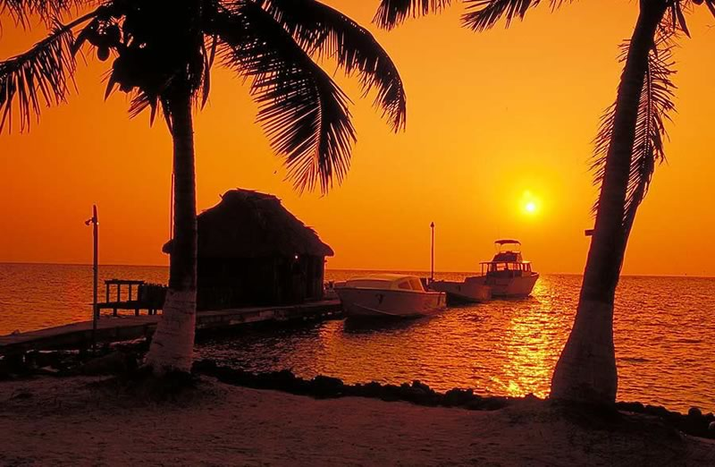 blackbird-sunset