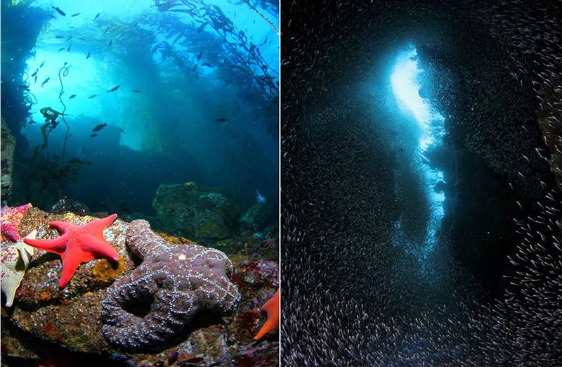 isla-diving-2