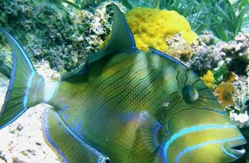 turneffe-flats-diving