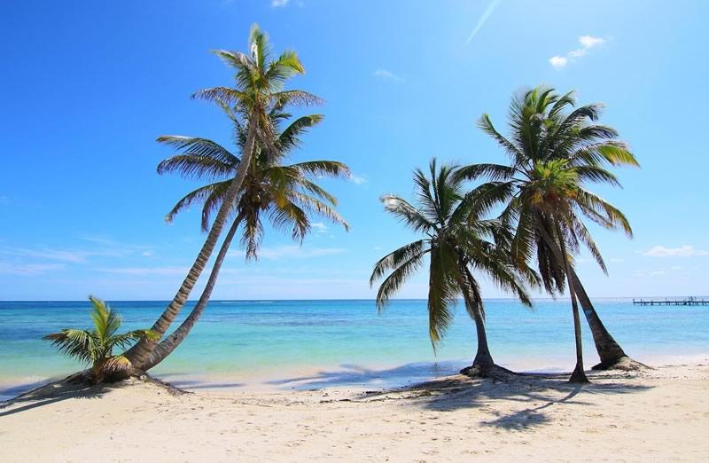 Blackbird Caye Beach