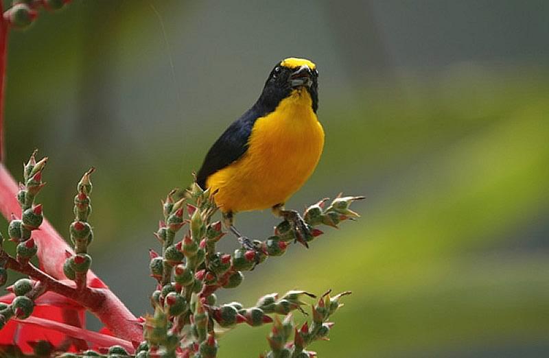 blackrock-birding